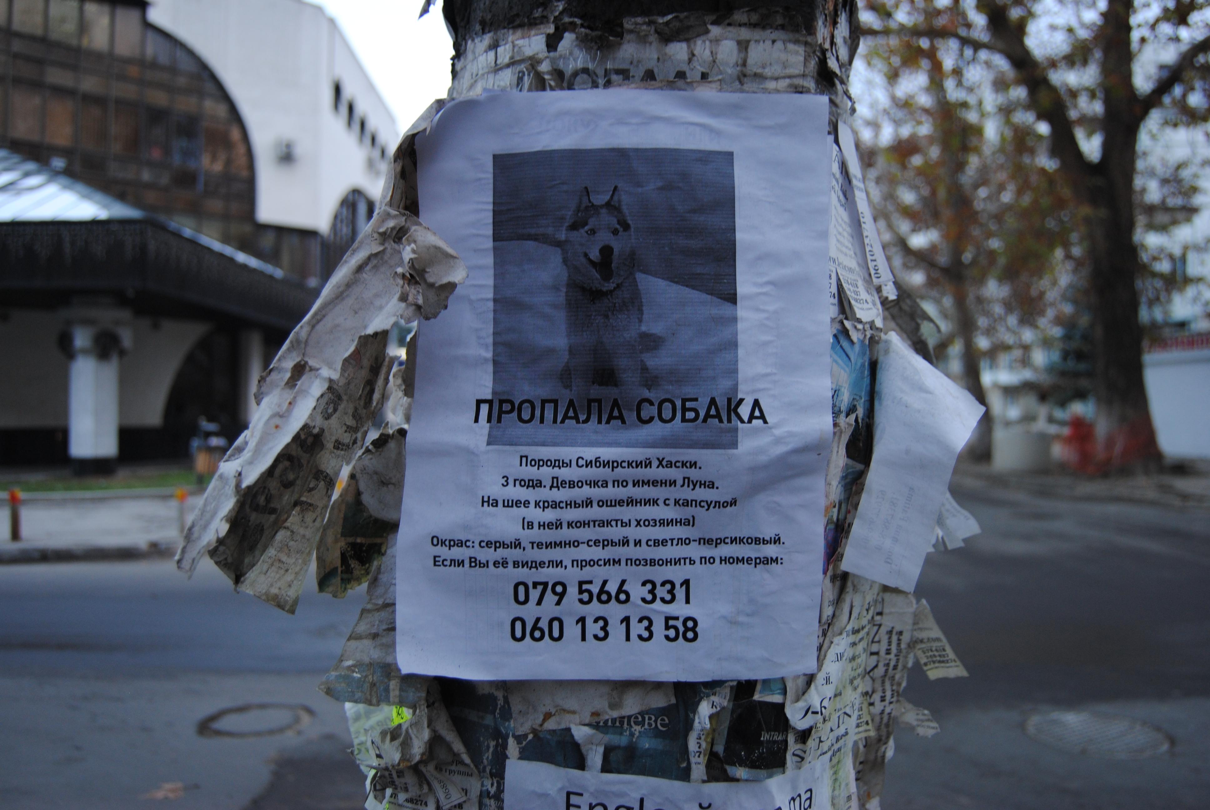 Perro perdido en las calles de Chisinau