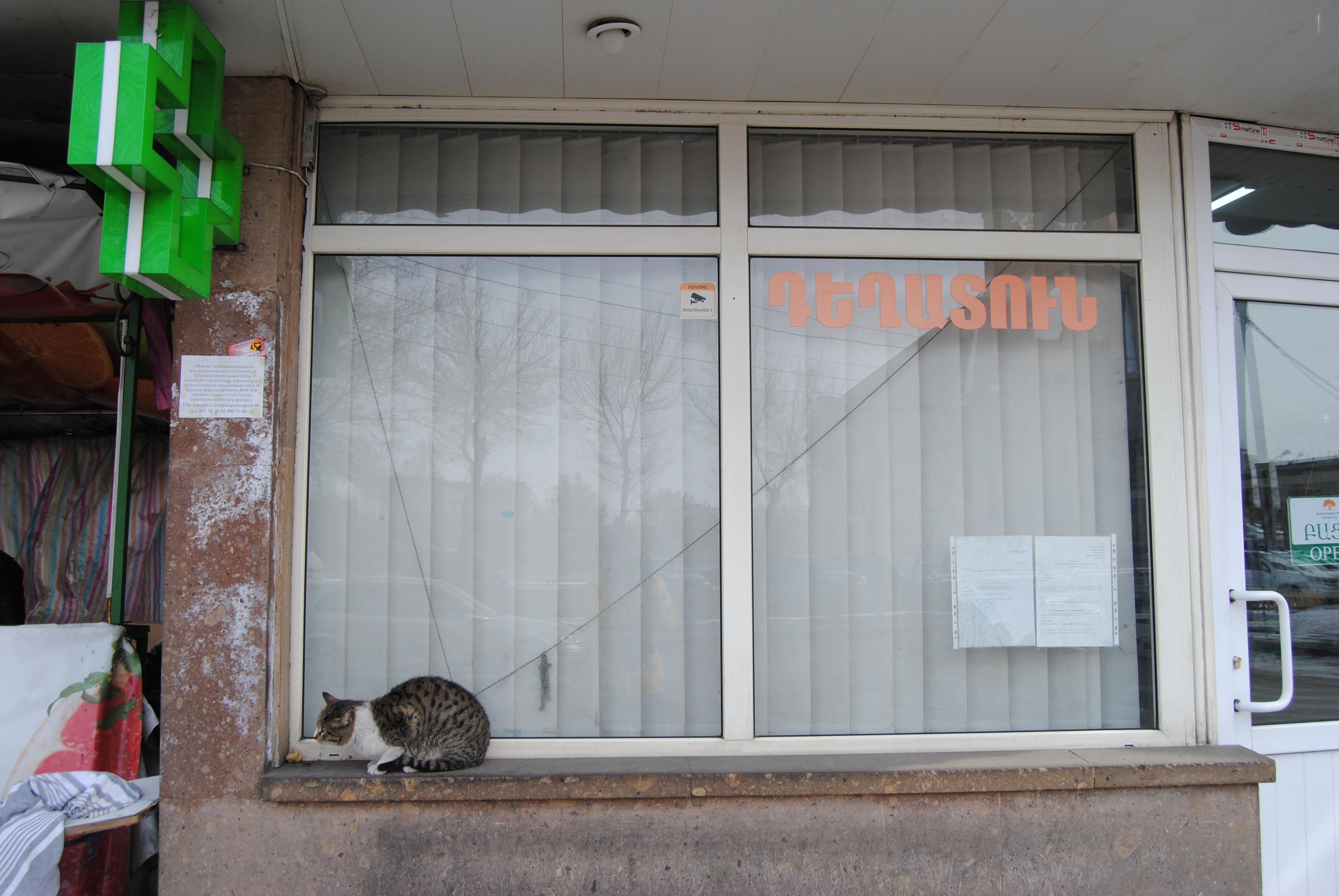 Gato en una farmacia de Ereván