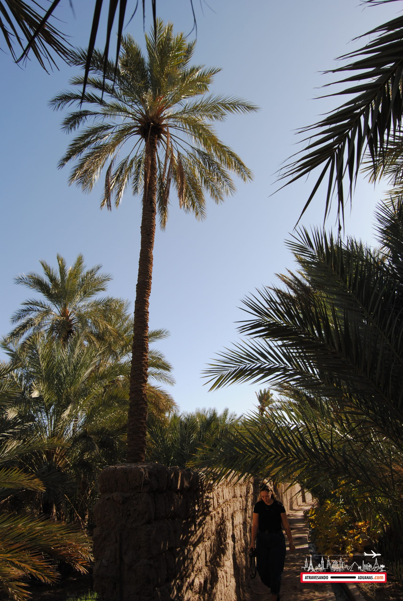 palmeral de figuig, marruecos