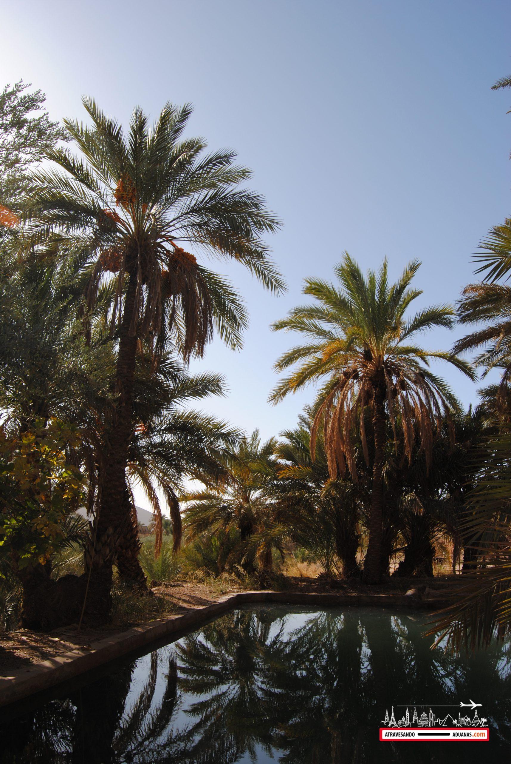 palmeral en figuig marruecos