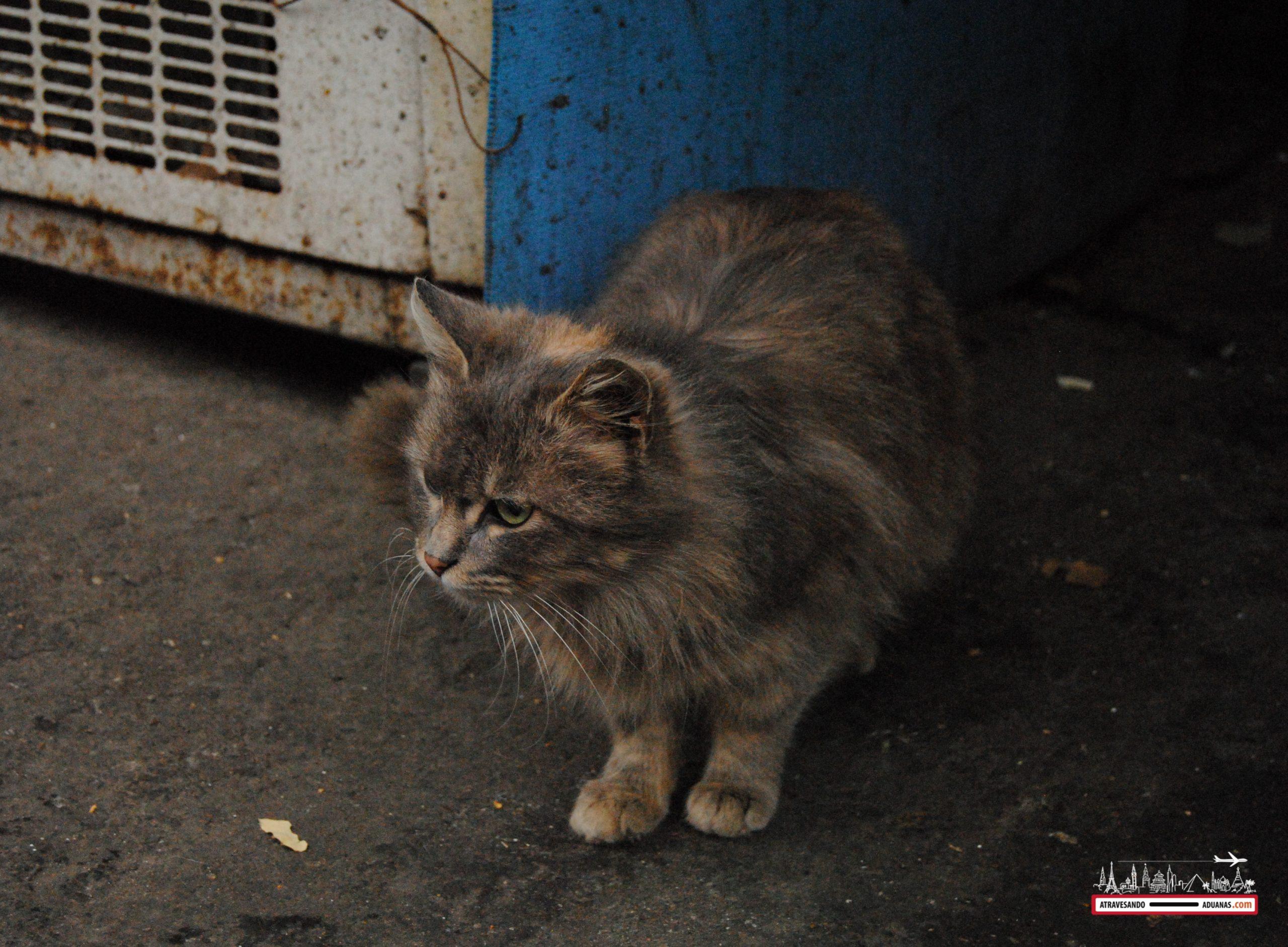 gato en el dezerter bazaar de tbilisi