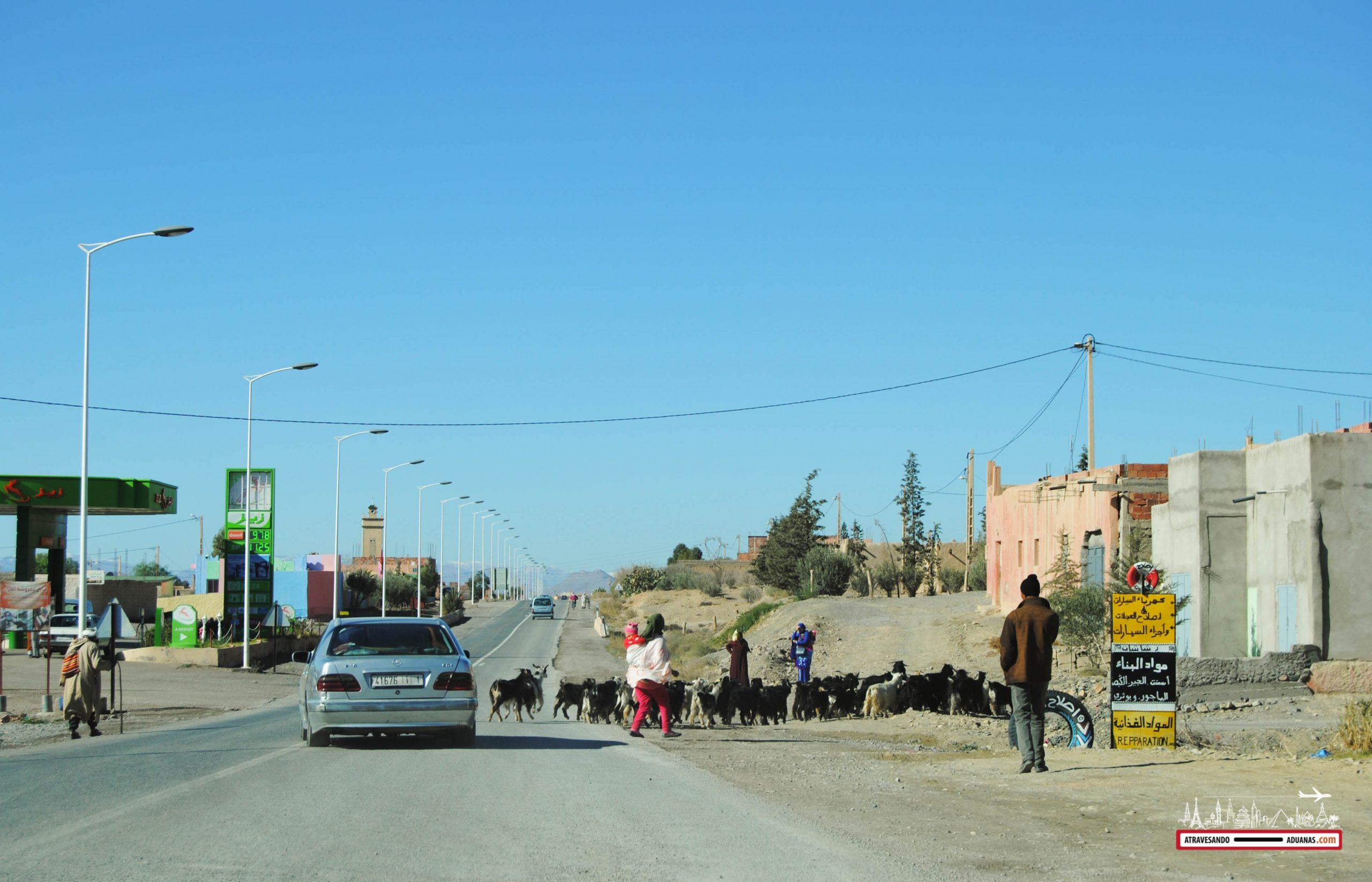 animales cruzando la carretera en Marruecos